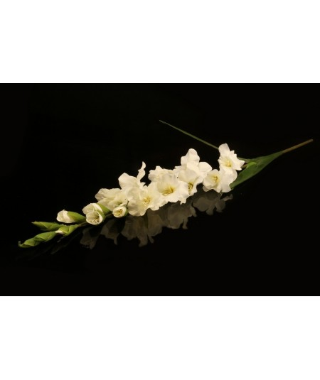 פרח משי סייפן לבן