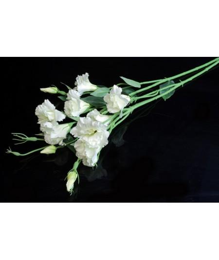 ענף ליזיינטוס לבן